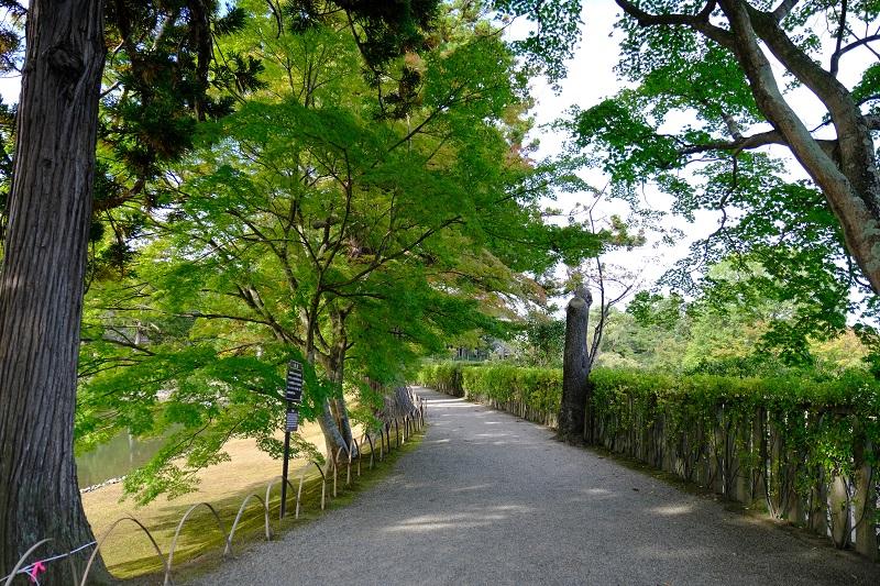 毛越寺の大泉ヶ池のの遊歩道の写真