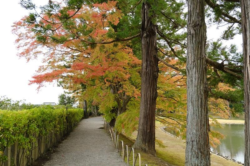毛越寺の紅葉10月24日の風景写真