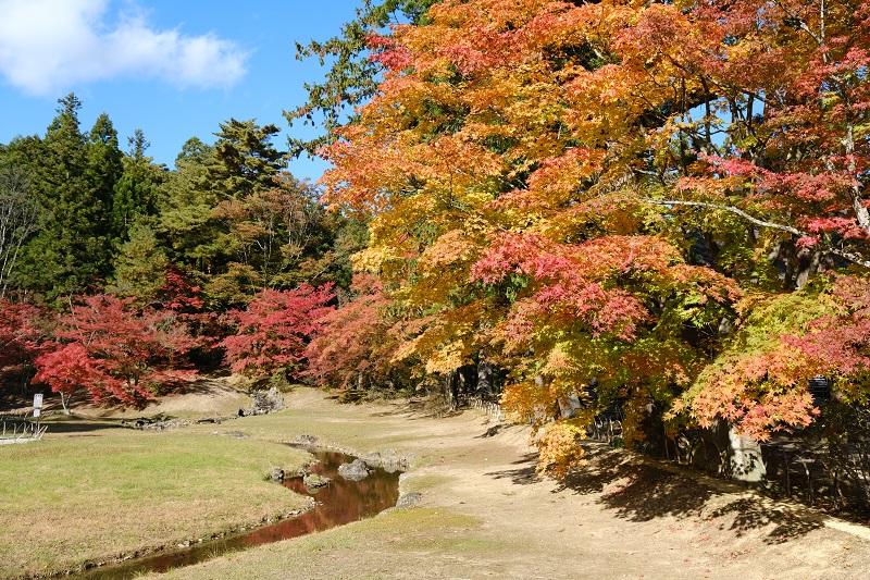 毛越寺の紅葉の写真