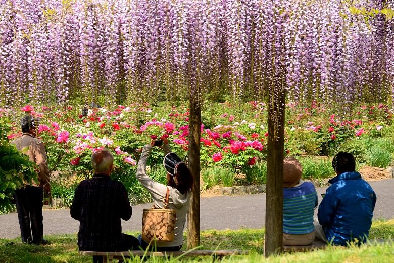 花と泉の公園2