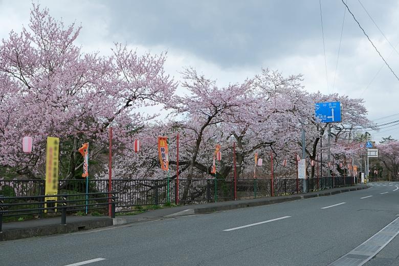 厳美渓の桜2