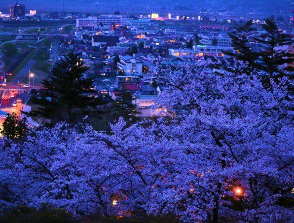 釣山公園桜ライトアップ