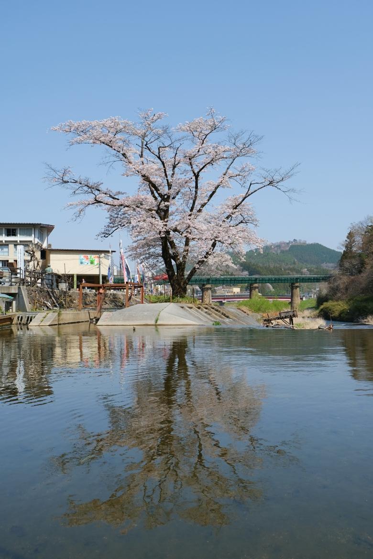 猊鼻渓の桜