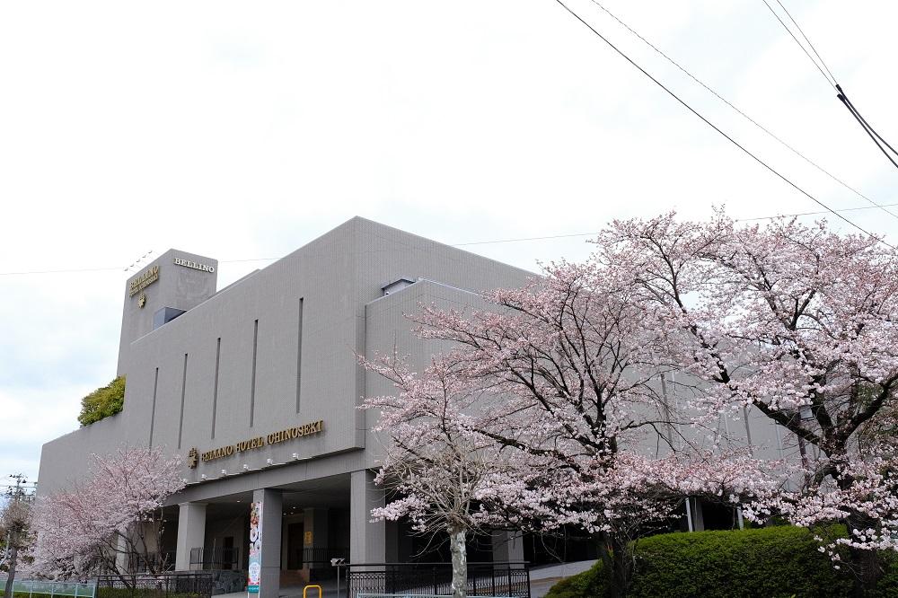 ベリーノホテルの桜の写真